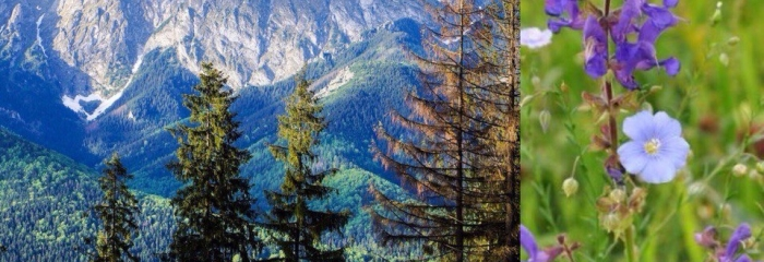 Альпийские травы на напольных покрытиях РУСКОРК